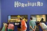 El hormiguero del Museu de les Ciències supera el medio millón de ejemplares