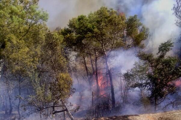 La Diputación duplica las brigadas de Divalterra que intervienen en el incendio de Bolbaite.