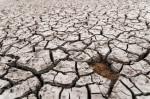 Las sequías son un fenómeno recurrente en la cuenca mediterránea. / Jesús Alenda