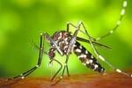 El Ayuntamiento lleva la lucha contra el mosquito tigre a los mercados municipales y la playa.