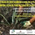 El Ayuntamiento y SEOBirdlife organizan una actividad en la playa de la Garrofera para retirar plantas exóticas invasoras.