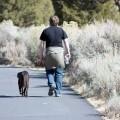 La Policía Local sanciona 72 dueños de mascotas y controla un total de 890 perros en dos semanas.