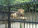 La corporación municipal lamenta la pérdida del profesor Ignacio Docavo, fundador del desaparecido zoológico de Valencia.