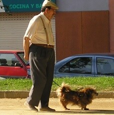 La infracción más frecuente ha sido no llevar ningún tipo de identificación del animal.