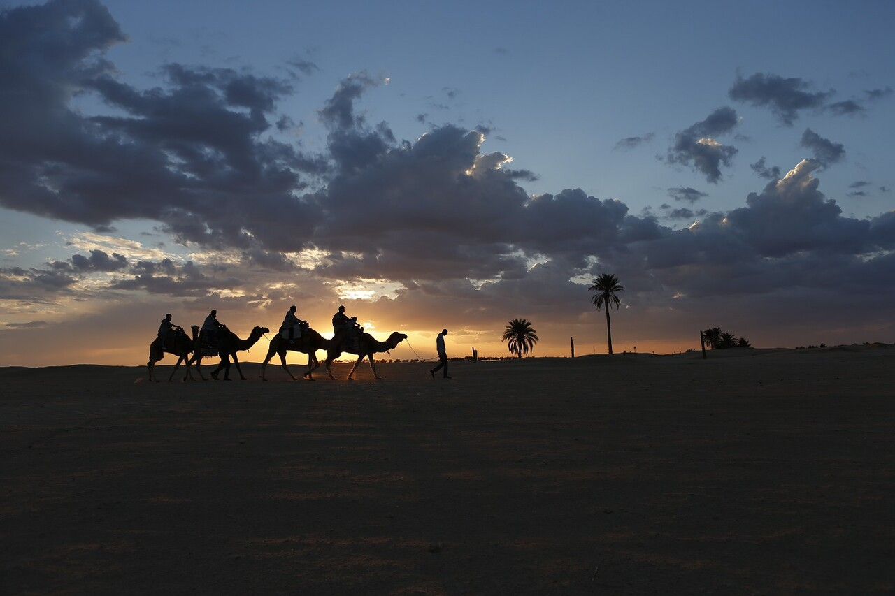 Camellos en desierto Túnez