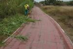 El Ayuntamiento limpia el carril bici que comunica Pinedo y el Saler y retira residuos del bosque de la Devesa.