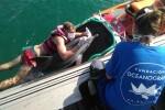 El delfín varado en la playa de la Malvarrosa no sobrevivió pese a los esfuerzos de los veterinarios del Oceanogràfic.