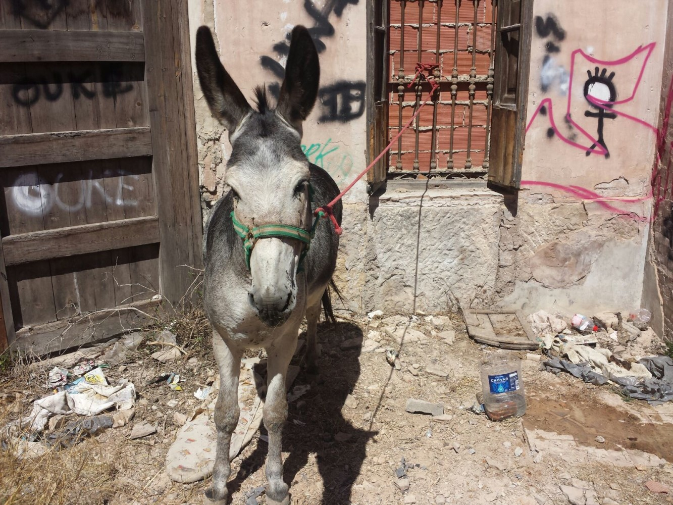 aa_burro