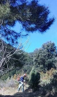 arboles-en-la-fuente-la-higuera