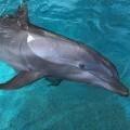 dos-delfines-del-zoo-de-barcelona-son-trasladados-al-oceanografic-de-valencia