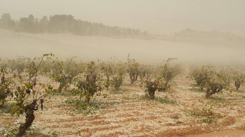 el-pedrisco-del-fin-de-semana-dana-mas-de-4-000-hectareas-de-cultivo-y-causa-perdidas-de-10-millones-1