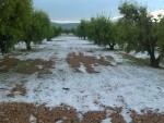 el-pedrisco-del-fin-de-semana-dana-mas-de-4-000-hectareas-de-cultivo-y-causa-perdidas-de-10-millones-3