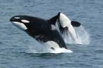 los-grandes-animales-marinos-estan-en-peligro-y-los-humanos-tienen-la-culpa_image_380-1