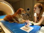 Los-perros-entienden-que-les-decimos-y-como-se-lo-decimos_image_380