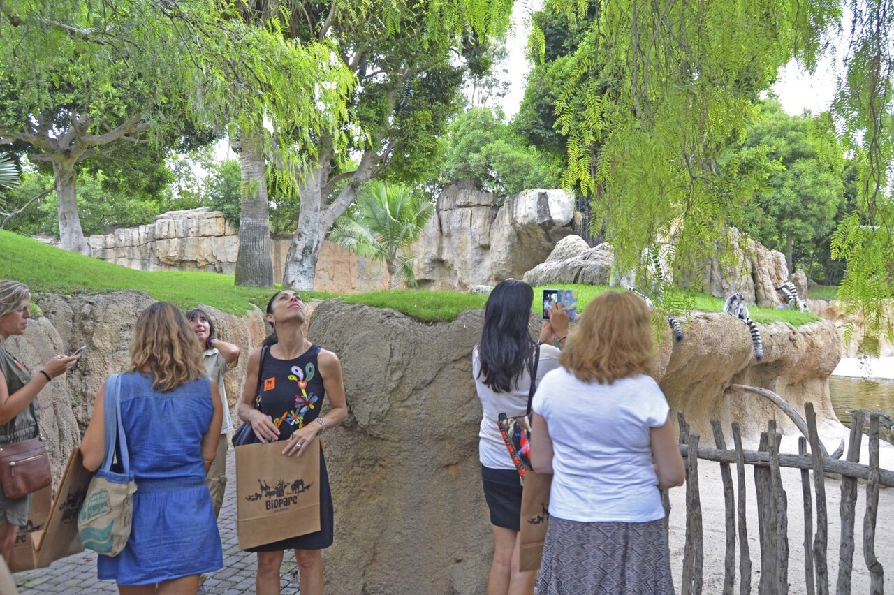 presentacion-de-la-nueva-oferta-escolar-de-bioparc-visita-guiada-por-el-parque-madagascar