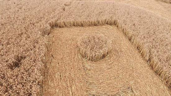 circulo-en-los-cultivos-en-forma-de-esvastica