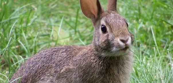 al-consumir-carne-de-conejo-los-deportistas-estarian-consumiendo-una-menor-cantidad-de-calorias-de-grasa-y-cuenta-con-vitamina-b12