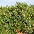 el-consell-lamenta-que-se-reduzca-la-subvencion-estatal-en-determinados-seguros-agricolas