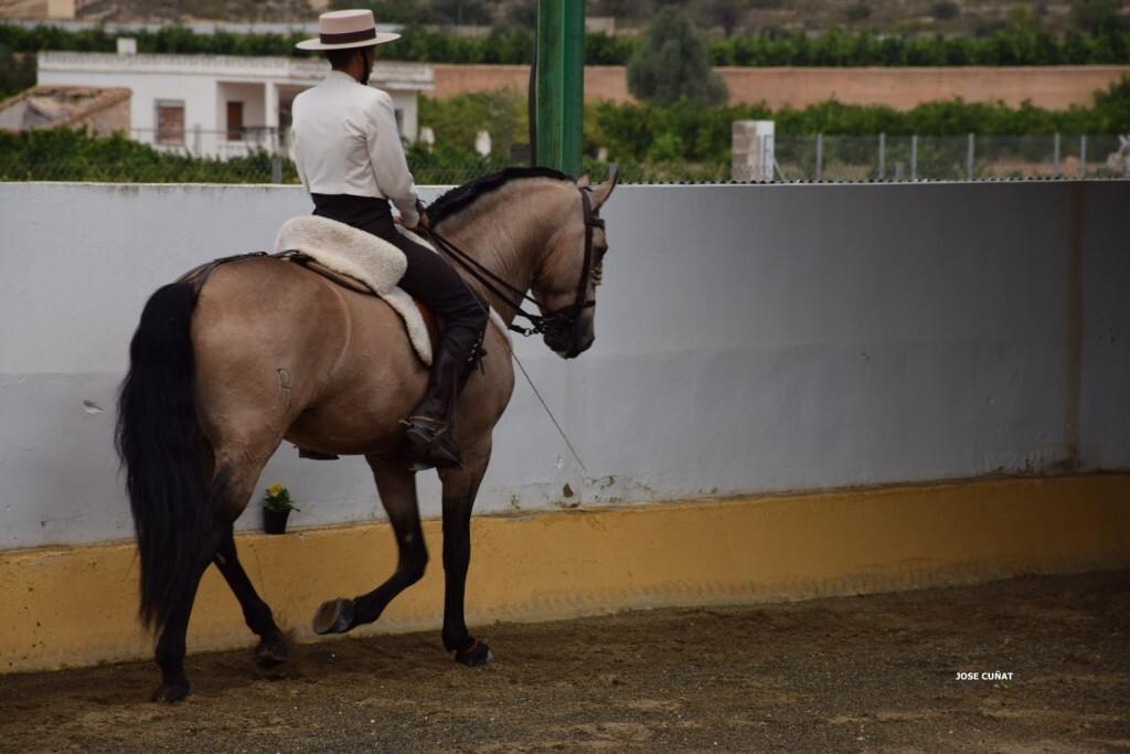 iii-prueba-de-la-copa-federacion-de-doma-de-alta-escuela-2016-centro-hipico-el-castoreno-benaguacil-14