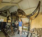 img-2-esqueleto-mamut-en-subasta-catawiki