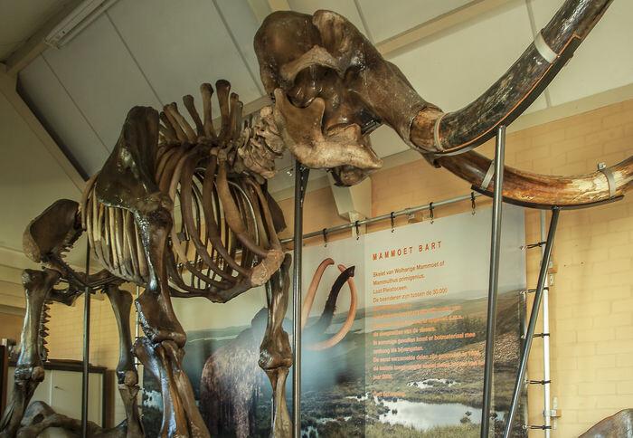 img-3-esqueleto-mamut-en-subasta-catawiki
