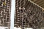 la-guardia-civil-interviene-25-primates-en-una-operacion-contra-el-trafico-ilegal-de-especies-protegidas