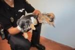 la-policia-nacional-detiene-a-tres-hombres-por-maltrato-animal-en-valencia