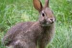 la-carne-de-conejo-mejora-el-rendimiento-deportivo