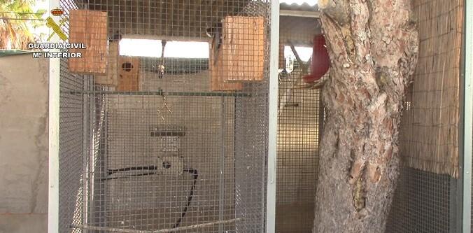 los-monos-eran-criados-en-domicilios-particulares-por-personas-que-tenian-relacion-con-tiendas-de-animales
