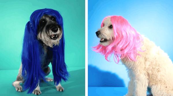 mascotas-pelucas-1