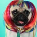 mascotas-pelucas-2