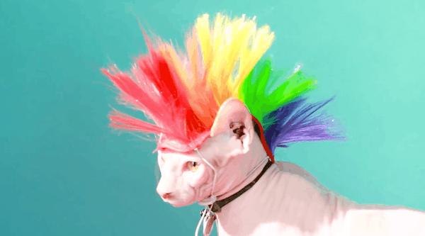 mascotas-pelucas-4