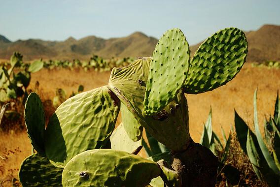 Desierto desierto de Tabernas (Almería)/kyezitri