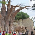 expedicion-africa-escuela-de-vacaciones-expertos-en-animales-curso-elefantes