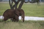 la-caza-furtiva-de-elefantes-africanos-produce-perdidas-turisticas-millonarias_image_380