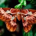 nacen-las-mariposas-mas-grandes-del-mundo-en-el-oceanografic