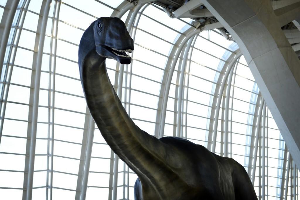 losillasaurus