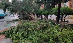Árboles caídos en la ciudad de Valencia por el temporal (1)