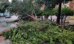 Árboles caídos en la ciudad de Valencia por el temporal (2)