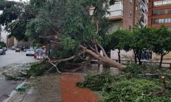 Árboles caídos en la ciudad de Valencia por el temporal (3)