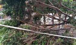 Árboles caídos en la ciudad de Valencia por el temporal (5)