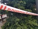 Árboles caídos en la ciudad de Valencia por el temporal (6)