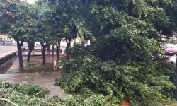 Árboles caídos en la ciudad de Valencia por el temporal (7)
