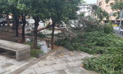 Árboles caídos en la ciudad de Valencia por el temporal (8)