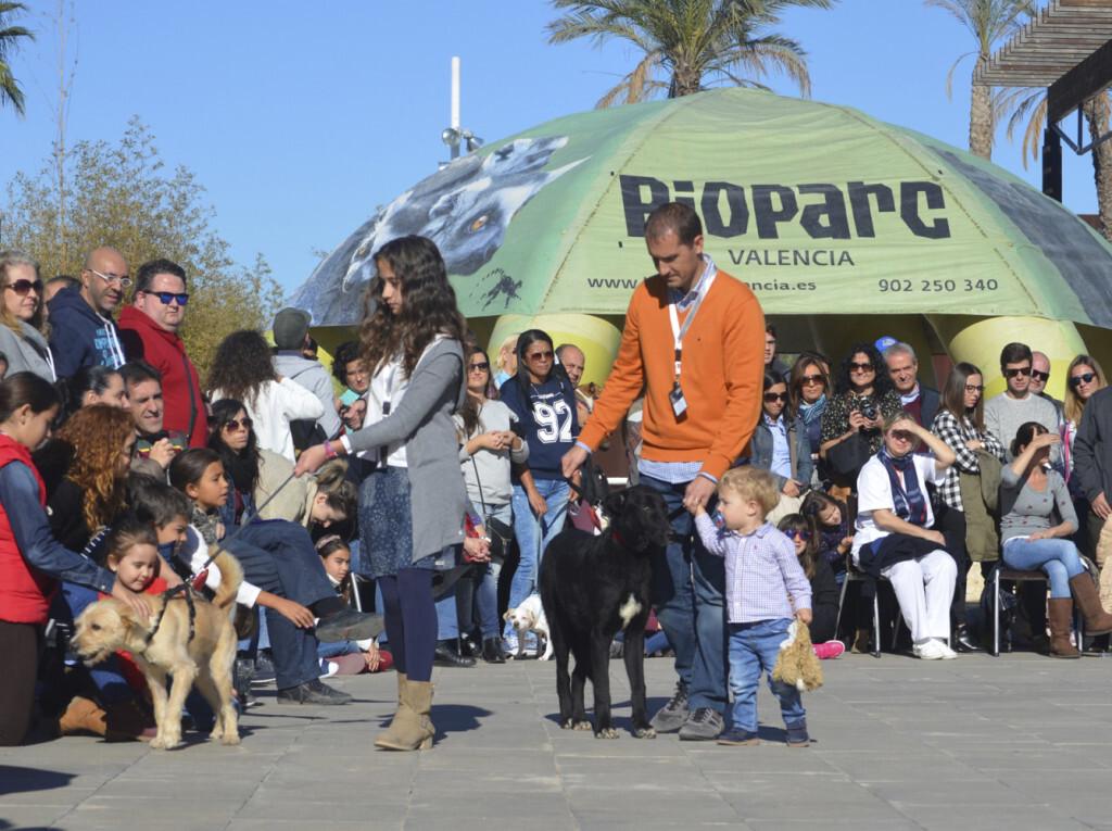 7º desfile AUPA - BIOPARC para fomentar la adopción - copia