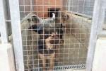 bienestar-animal-reclama-que-se-depuren-responsabilidades-por-los-actos-vandalicos-en-el-centro-de-acogida-de-animales-de-benimamet
