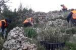 Hidraqua inicia la II fase de reforestación de las zonas incendiadas en Pego y que ya cuentan con 7.000 nuevas plántulas.