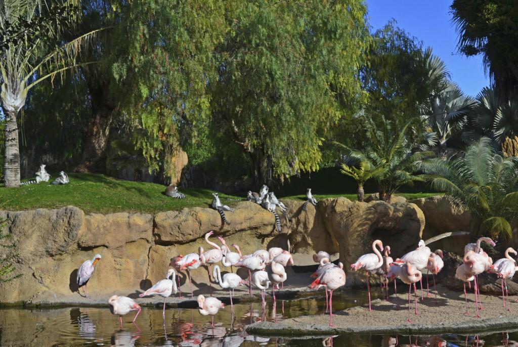 Los animales de BIOPARC Valencia combaten la ola de frío - lémures y flamencos al sol
