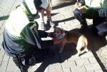 Policía Local y animales.
