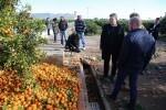 Puig anuncia que el Consell estudia medidas de apoyo directo a los agricultores y al empleo del sector en las comarcas afectadas por el temporal.